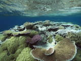 Great Barrier Reef Near Port Douglas  Queensland  Australia