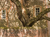 A Tree Grows from the Brick Courtyard of a Historic Colonial Home