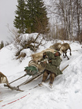 A Komi Nomadic Herder Slows Down a Sled from Crushing a Reindeer