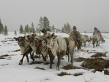 A Nomadic Komi Reindeer Herder Between Tundra and Taiga Forests