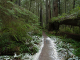 A Rare Dusting of Snow in Del Norte Redwoods State Park