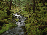 Creek in Temperate Rainforest Along Eyak Lake  Cordova  Alaska