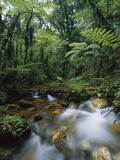 Creek Running Through Montane Rainforest  Bwindi Impenetrable Nat'l Park  Uganda