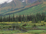 Taiga Vegetation and Beaver Pond  Chugach National Forest  Alaska