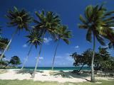 Bacardi Beach  Cayo Levantado  Dominican Republic  Caribbean
