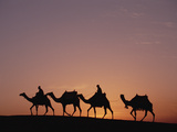 Egyptians Riding Camels across Desert Near the Pyramids of Giza at Sunset  Cairo  Egypt