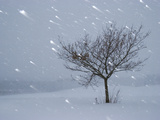Lonely Tree in Snow  Bavaria  Germany