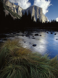 River Grasses at Merced River  Reflection of Late Light on El Capitan  Yosemite  California
