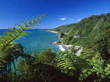 West Coast  Paparoa National Park  South Island  New Zealand
