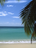 Palm Fronds Frame Bacardi Beach and Lagoon  Dominican Republic  Caribbean
