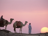 Bedouins with Dromedary Camels (Camelus Dromedarius) at Sunset  Oasis Dakhia  Egypt