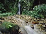 Waterfall on Gombe Stream in Low Montane Tropical Rainforest  Tanzania