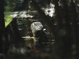 A Water Monitor Lizard Standing in Water