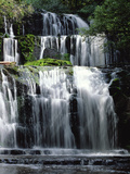Purakaunui Falls Cascading in Tropical Rainforest  Catlins  South Island  New Zealand