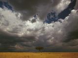 Storm Front and Acacia Trees (Acacia Drepanolobium)  Masai Mara National Reserve  Kenya