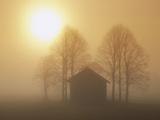 Barn  Trees and Sun Shining Through Morning Mist  Bavaria  Germany