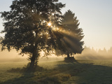 Sun Shining Through Trees and Morning Mist  Upper Bavaria  Germany