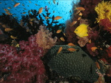 A Colorful Reef Scene with Soft and Hard Corals  and Schools of Fish