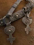 Detail of Ornate Leather Horse Tack on a Horse in the Andes Mountains  Ecuador