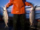 Driftnet Fishing for Sockeye Salmon Along the Nushagak River
