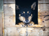 A Sled Dog in His Dog House