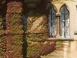 Windows and Wall Covered with Boston Ivy  Parthenocissus Tricuspidata
