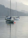 Sailboats Moored in Carey&#39;s Bay