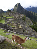 The Ruins at Machu Picchu and a Llama