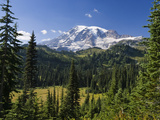 Mount Rainier with Coniferous Forest  Washington
