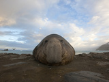 A Bull Elephant Seal Rests on a Beach