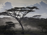 Clouds  African Trees and Dust on Tanzania's Serengeti Plain