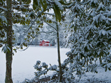 Snowy Landscape with a Red Barn and Magnolia Trees