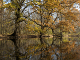 Trees in Autumn Hues and their Reflections in the Concord River