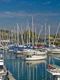 Sailboats Docked Along the Shore of Lake Ontario