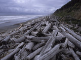 Driftwood Along the Pacific Shoreline in Olympic National Park