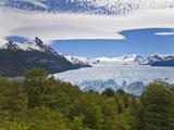 Looking over Treetops Toward Perito Moreno Glacier