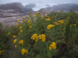 Wildflowers Blooming on a Rocky Atlantic Coast in Maine
