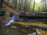 Small Waterfall in a Forest of European or Common Beech