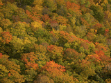 Colorful Trees on a Mountainside in Autumn