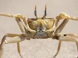 A Sand Crab on the Beach