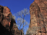 Canyon Walls Along the Virgin River