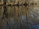 Trees and their Reflections in the Concord River