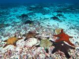 Starfish Off Darwin Island Papier Photo par Mauricio Handler
