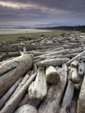 Driftwood on the Beach in Pacific Rim National Park