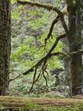 A Rainforest at Englishman River Falls Provincial Park