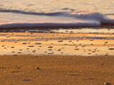Close-Up of Surf on Wrightsville Beach at Sunrise