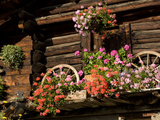 Colorful Flowers in Window Boxes on an Alpine Cottage