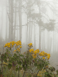 Blooming Shrubs and Trees in a Foggy Forest
