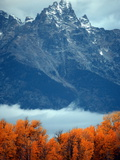 Fall Colors in Grand Teton National Park