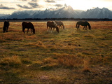 A Herd of Horses Grazing in a Field